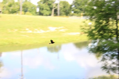 Perkins Road Community Park Baton Rouge Louisiana (74)