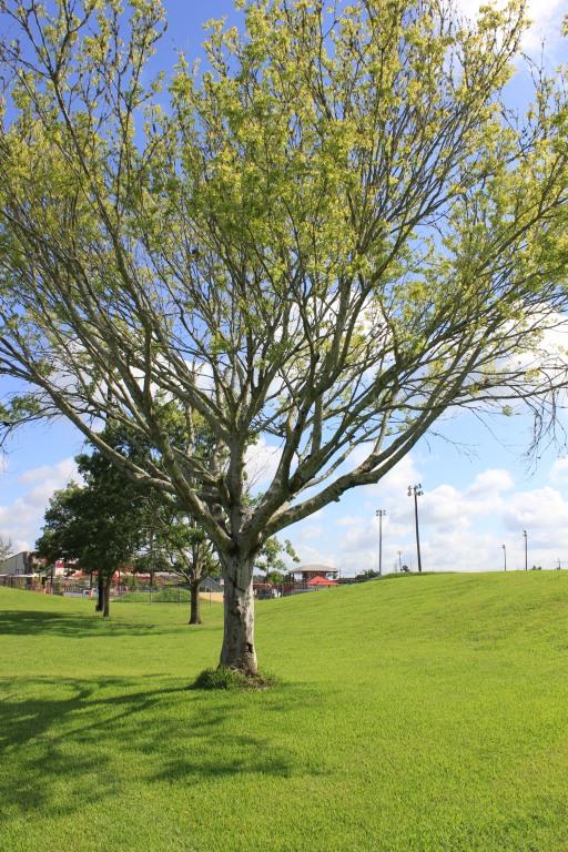 Perkins Road Community Park Baton Rouge Louisiana (79)