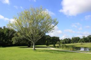 Perkins Road Community Park Baton Rouge Louisiana (83)