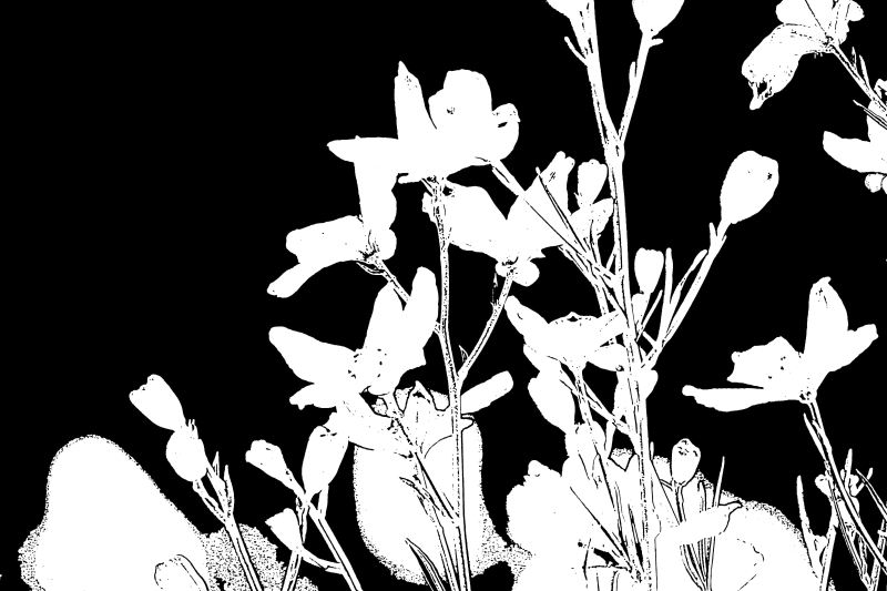 Stamp White on Black Flowers Stems by Kevin Woolsey