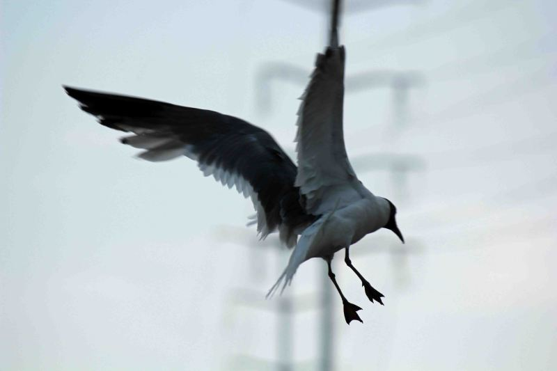 Bird in Flight - How to Fly - Otto Lilienthal Quote Ideas