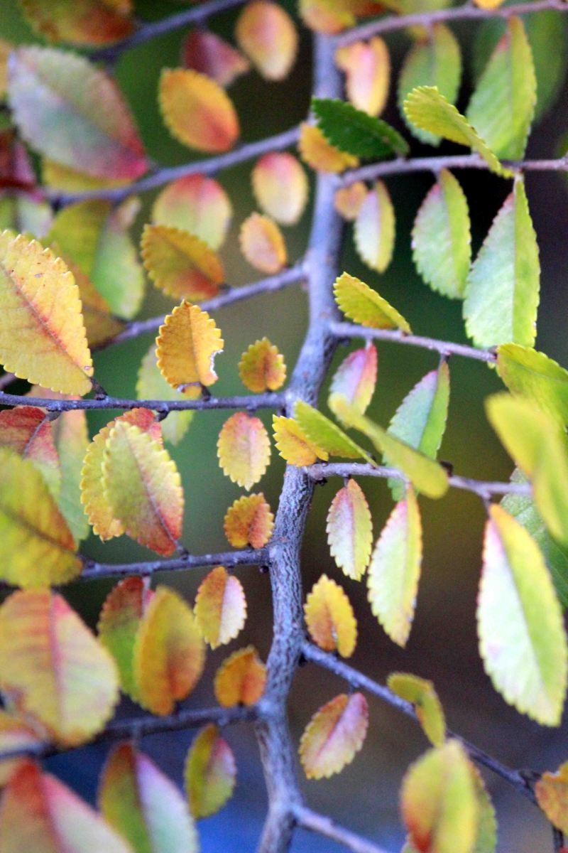 Leaves Changing Colors at Highland Park Baton Rouge