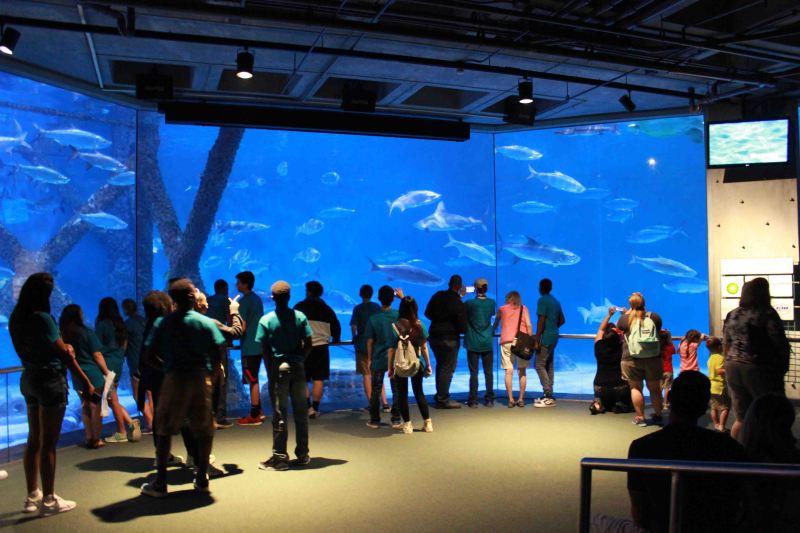Audubon Aquarium of the Americas NOLA